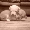Guero & Lulu